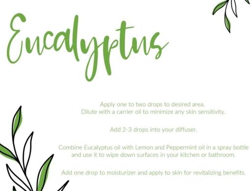 euclyptus